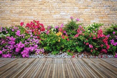 Ogrody z kwiatami pod domem.