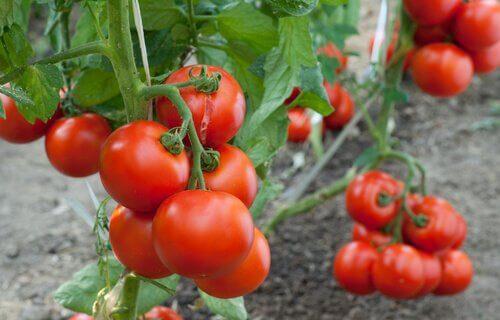 Zastosowanie cynamonu chroni warzywa.