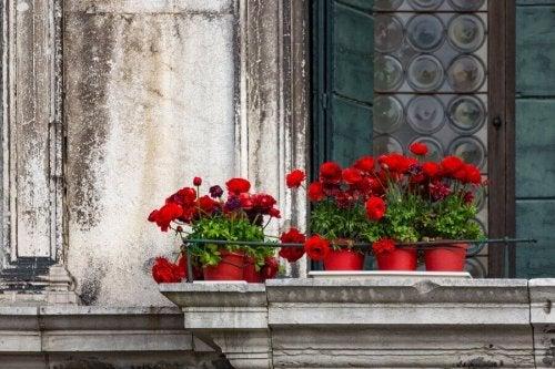 Ogród na balkonie - 5 rodzajów kwiatów