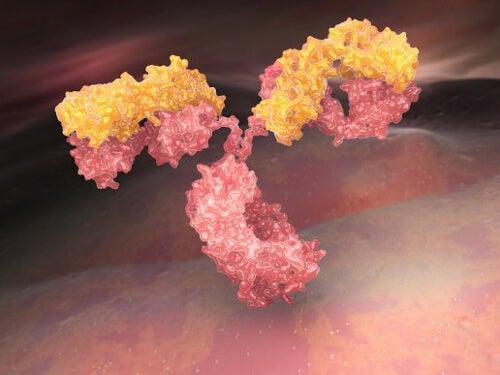 Immunoglobuliny - czym są i jak nam służą?