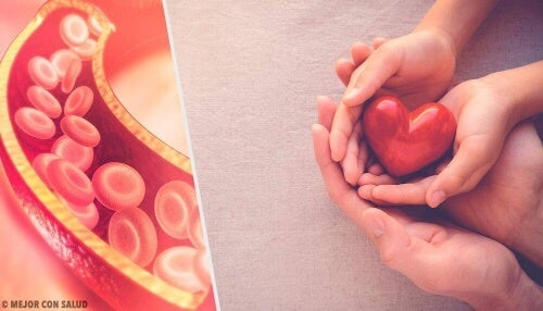 Wpływ cholesterolu na zdrowie – kompendium wiedzy