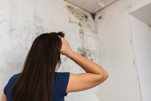 Pleśń w łazience – 4 sposoby na oczyszczenie ścian