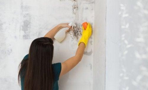 Pleśń w łazience można usunąć domowymi metodami.