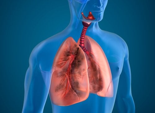 Oczyszczenie płuc – osiągnij je zmieniając dietę!