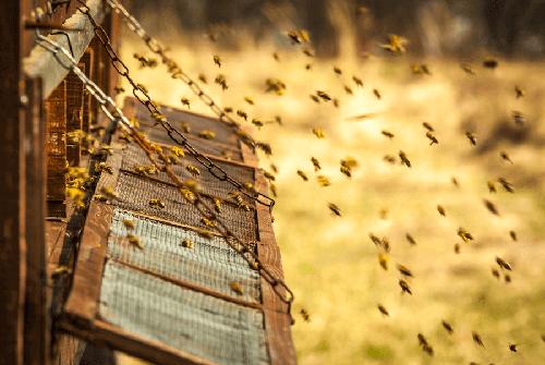 Pszczoły i ule.