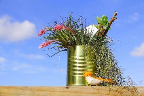 Rośliny w puszce stworzą piękny miniogród