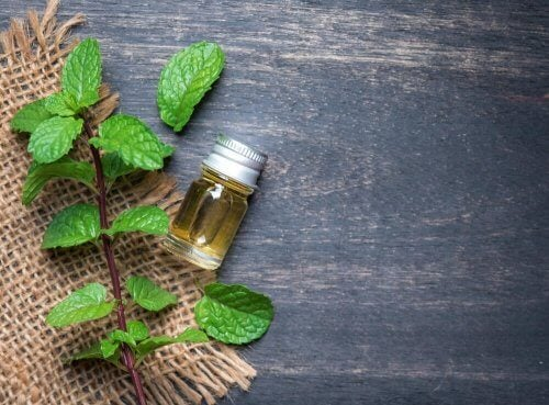 Olejek miętowy – korzyści dla zdrowia i piękna
