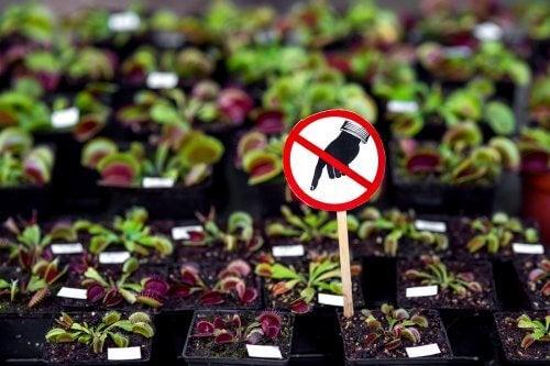 Niebezpieczne rośliny, których nie należy trzymać w domu