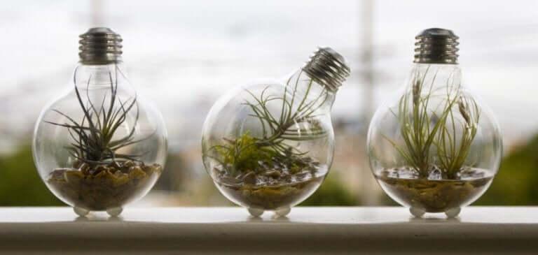Dekorowanie roślinami - żarówki doniczki