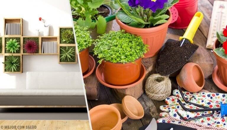 Dekorowanie roślinami - 10 pomysłów, jak ożywić dom