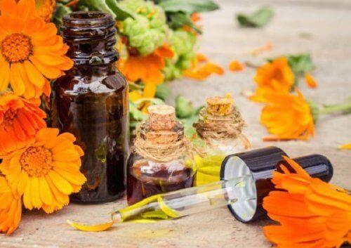 Kwiaty arniki i oliwa