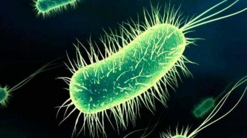 Bakteria e.coli