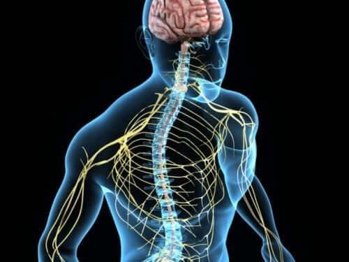 System nerwowy człowieka a cholina