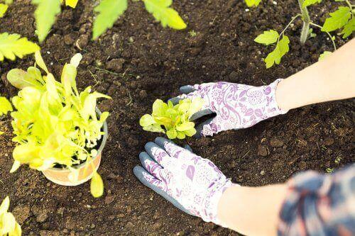 Jak przesadzać rośliny