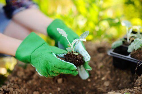 Przesadzanie roślin – o czym należy pamiętać podczas tej czynności?