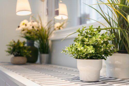 Rośliny domowe: 9 porad na temat ich pielęgnacji