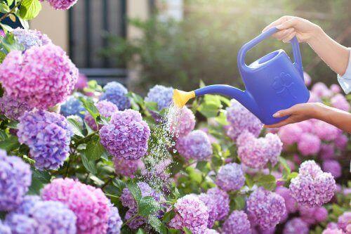Aromatyczne kwiaty