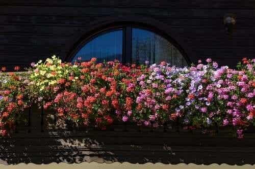 Aromatyczne kwiaty – pięć propozycji do małego ogrodu