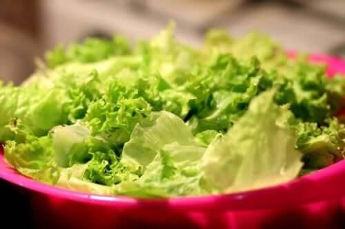 Odmiany sałaty