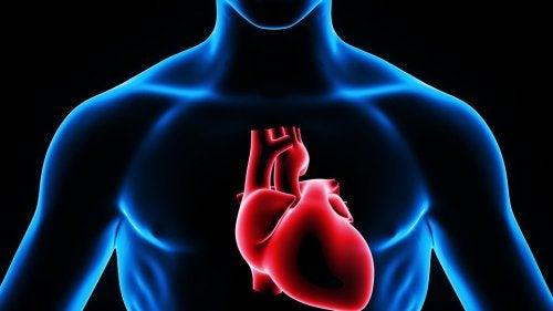 Serce - zastrzyk domięśniowy