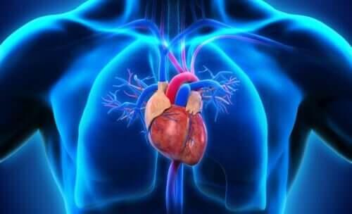 Części serca