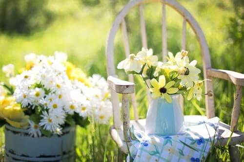 Letnie kwiaty - 6 propozycji dla Twojego ogrodu