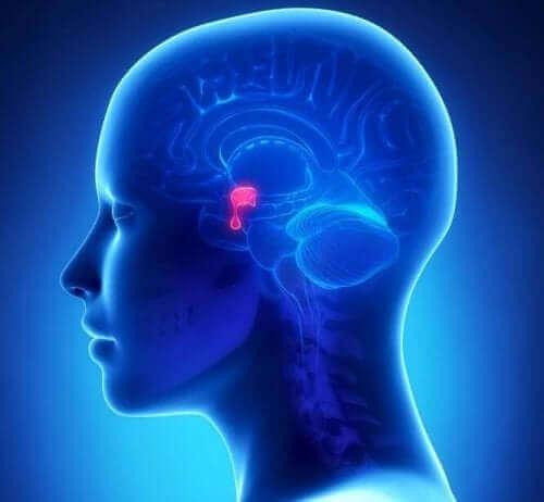 Mózg i przysadka mózgowa