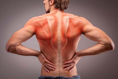Budowa anatomiczna mięśni grzbietu