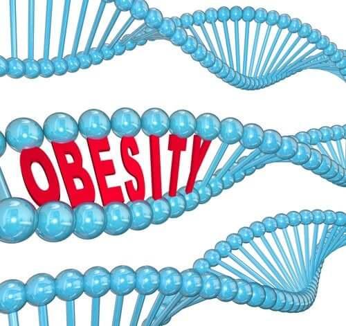 Gen otyłości – co na ten temat mówi nauka
