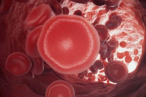 Proces krzepnięcia krwi - na czym polega?