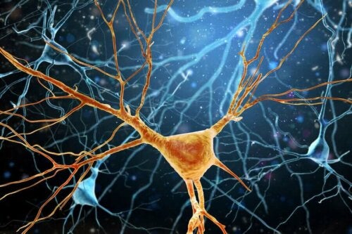 Neurogeneza - grafika