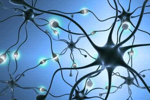 Neurogeneza - jak generowane są nowe neurony?