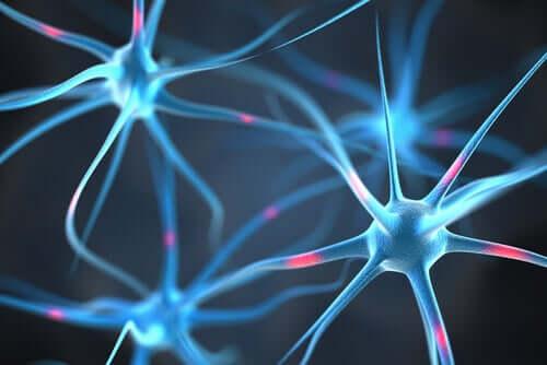 Neurony w mózgu