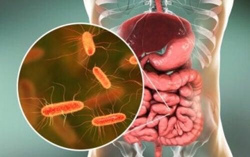 Mikrobiota jelitowa