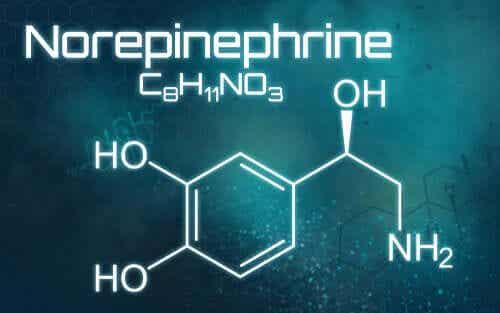 Norepinefryna - co to jest i do czego służy?