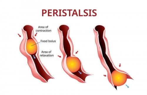 Perystaltyka - zaparcia wywołane spowolnioną perystaltyką
