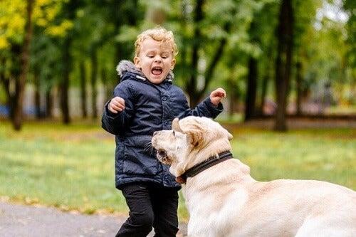 Moje dziecko boi się zwierząt: co mogę zrobić?