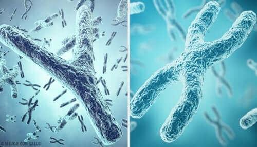 Chromosomy płci: telomery