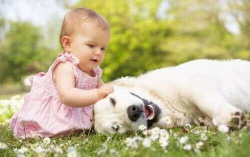 Małe dziecko z psem - co zrobić, gdy dziecko boi się zwierząt?