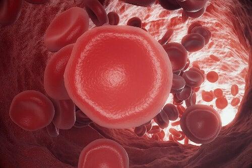 Czerwone krwinki