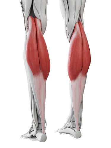 Mięśnie łydek