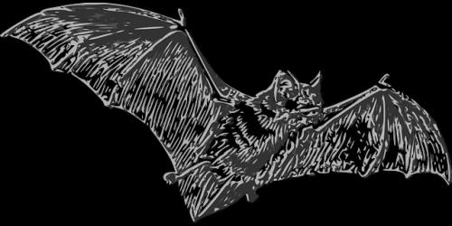 Nietoperze są przyczyną wybuchu epidemii koronawirusa