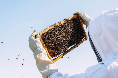 Pszczoły wyjęte z ula