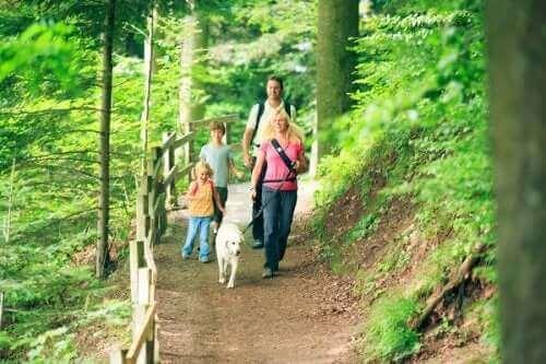 Rodzinny spacer - jesienne zajęcia na świeżym powietrzu