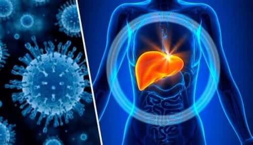 Toksyczne zapalenie wątroby - metabolizm wątrobowy