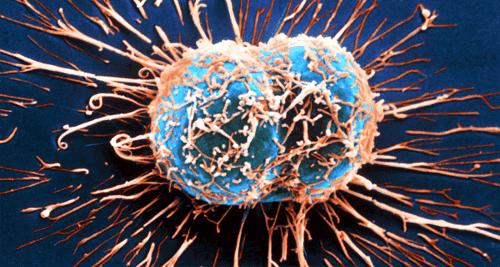 Jak układ odpornościowy walczy z rakiem?