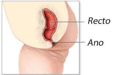 Anatomia odbytu