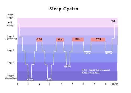 Cykl snu