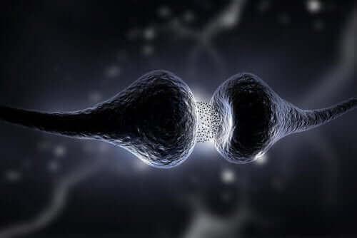 Synapsa, neuroprzekaźnictwo
