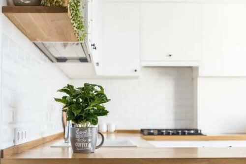 Jak uprawiać świeże zioła w kuchni?